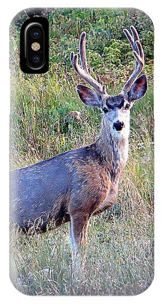 Mule Deer Buck IPhone Case