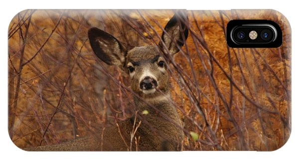 Mule Deer Doe IPhone Case