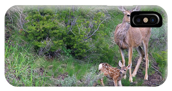 Mule Deer iPhone Case - Mule Deer Doe With Fawn by Ken Archer