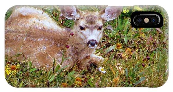 Mule Deer Fawn IPhone Case