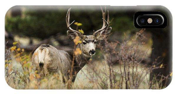 Buck iPhone Case - Mule Deer I by Chad Dutson