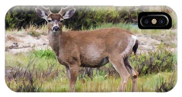 Mule Deer In Early Velvet IPhone Case