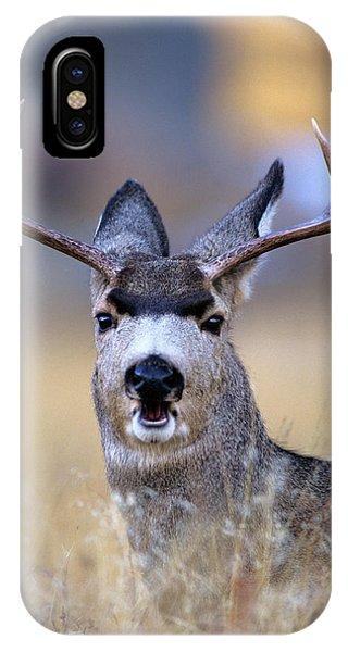 Rocky Mountain Np iPhone Case - Mule Deer Odocoileus Hemionus Buck by Animal Images
