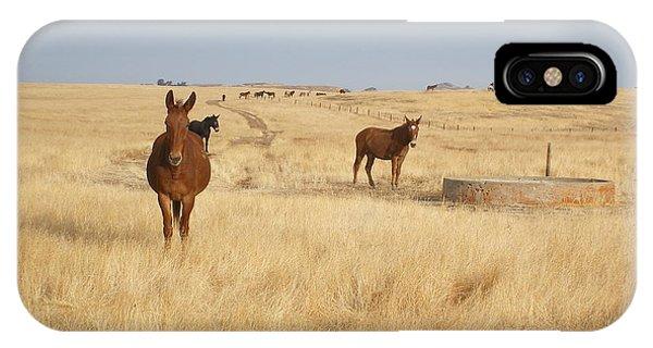 Mules In Gold Grass IPhone Case