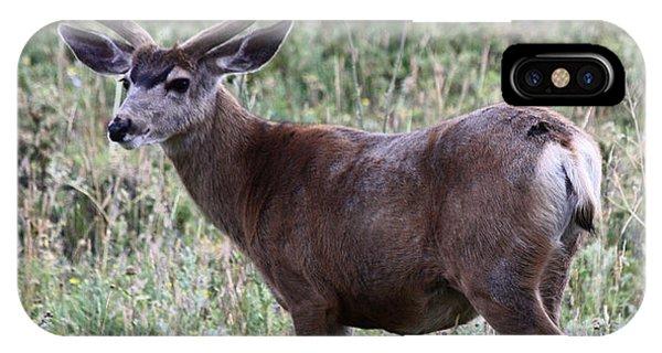 Muley Buck IPhone Case