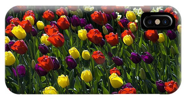 Multicolored Tulips At Tulip Festival. IPhone Case
