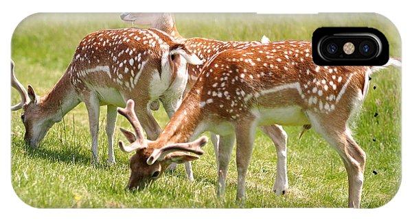 Multitasking Deer In Richmond Park IPhone Case