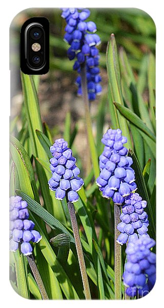 Muscari Armeniacum IPhone Case
