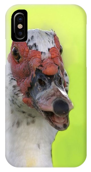 Muscovy Duck IPhone Case