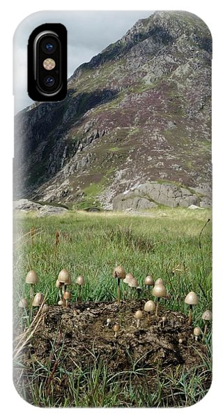 Upland iPhone Case - Mushrooms Growing On Cow Dung by Cordelia Molloy/science Photo Library