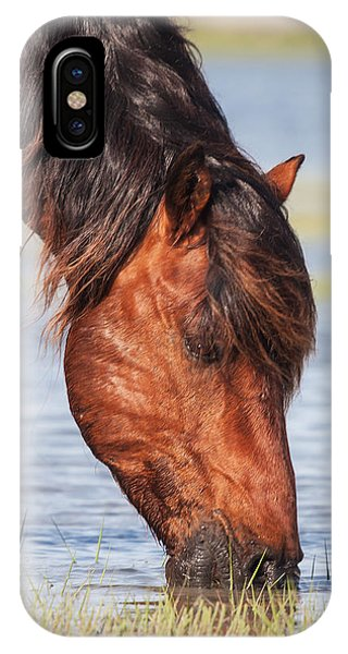 Mustang Feeding In The Marsh IPhone Case