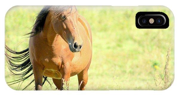 Mustang In Meadow IPhone Case