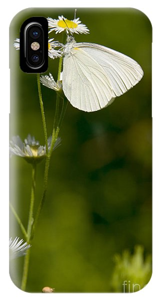 Pterygota iPhone Case - Mustard White Butterfly by Gregory K Scott