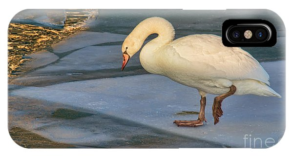 Mute Swan On Ice  IPhone Case