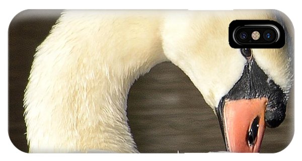 Mute Swan IPhone Case