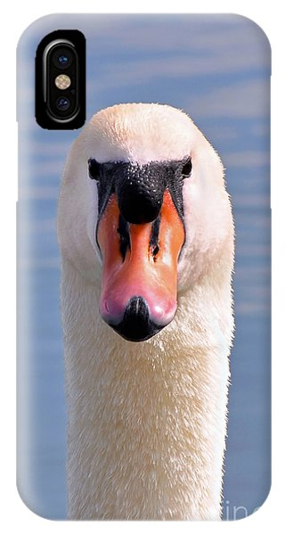 Mute Swan Staring IPhone Case