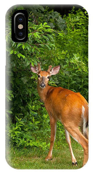 White Tailed Deer iPhone Case - Mutual Respect by Karol Livote