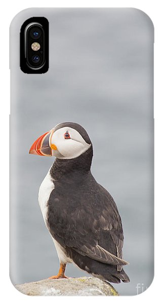 Cute Bird iPhone Case - My Feathered Friend by Evelina Kremsdorf