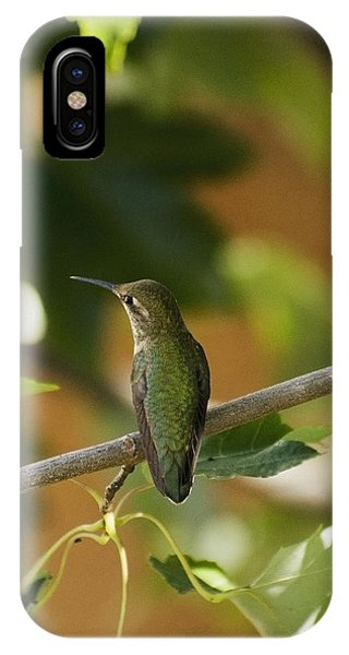 My Green Colored Hummingbird 4 IPhone Case