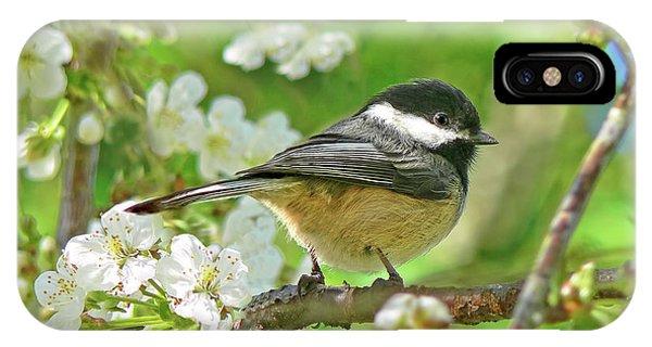 Chickadee iPhone Case - My Little Chickadee In The Cherry Tree by Jennie Marie Schell