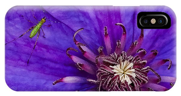 My Old Clematis Home IPhone Case