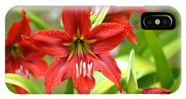 My Red Daylily...after The Rain IPhone Case