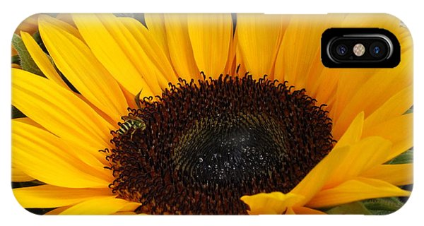 My Sunshine IPhone Case