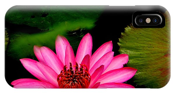 Mystical Water Lilly IPhone Case