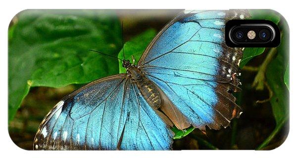 Mystical Wings Phone Case by Fraida Gutovich
