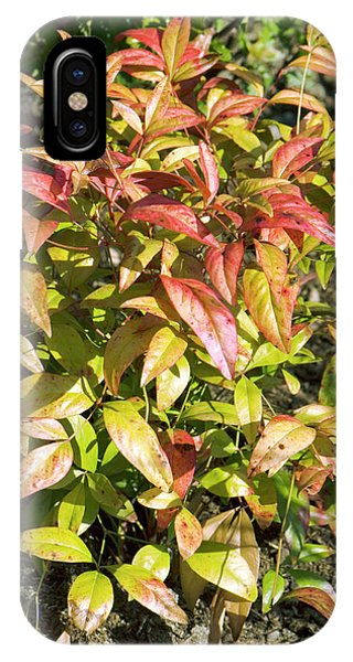 Cultivar iPhone Case - Nandina Domestica 'fire Power' Leaves by Adrian Thomas