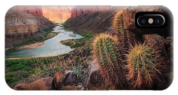 Scenic iPhone Case - Nankoweap Cactus by Inge Johnsson