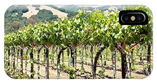 Napa Vineyard Grapes IPhone Case