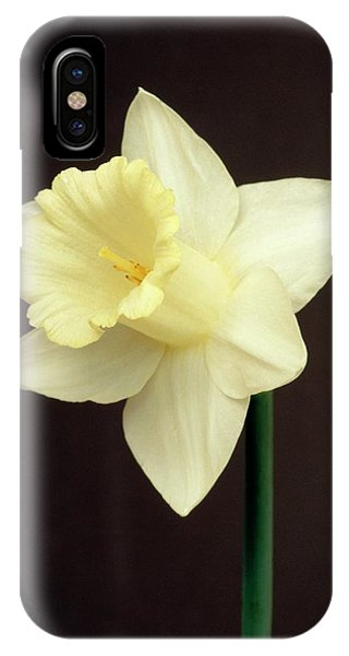 Yellow Trumpet iPhone Case - Narcissus Mount Hood by Brian Gadsby/science Photo Library