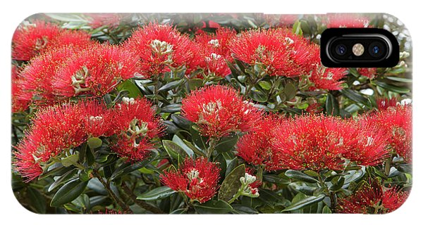 Native Pohutukawa Flowers (metrosideros Phone Case by David Wall