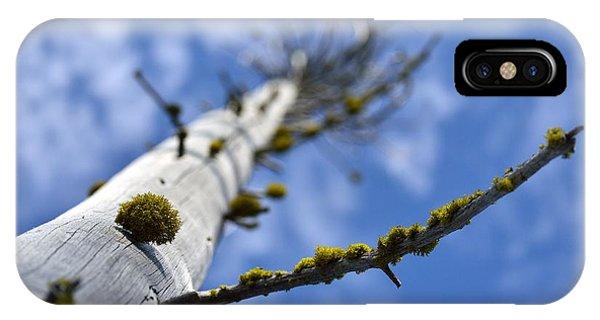 Natural Bonsai Phone Case by Rich Rauenzahn