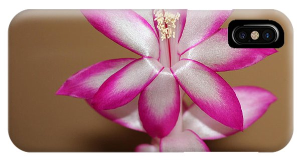 Natural Pink Christmas Cactus IPhone Case