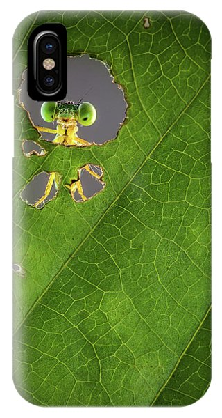 Leaf iPhone Case - Nature Frame by Wilianto