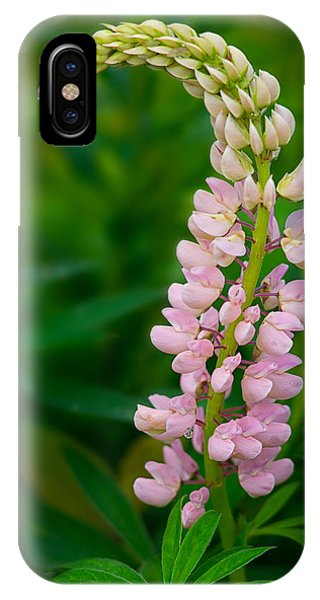 Nature Takes A Bow IPhone Case