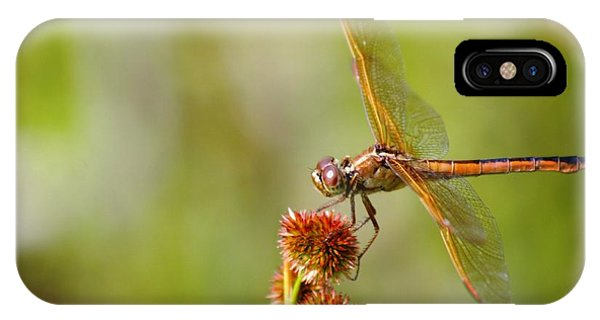 Nature's Dragon IPhone Case