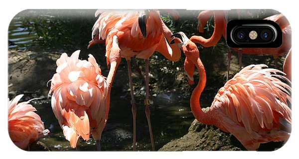 iPhone Case - Necks Legs And Feathers by Anthony Forster