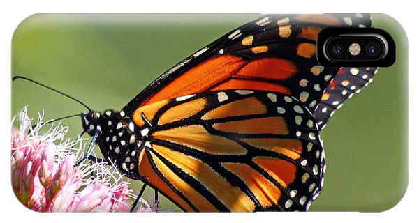 Nectaring Monarch Butterfly IPhone Case
