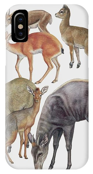Neotraginae Mammals Phone Case by Deagostini/uig/science Photo Library