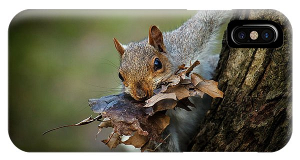 Leaf iPhone Case - Nest Building Squirrel by Michael Castellano