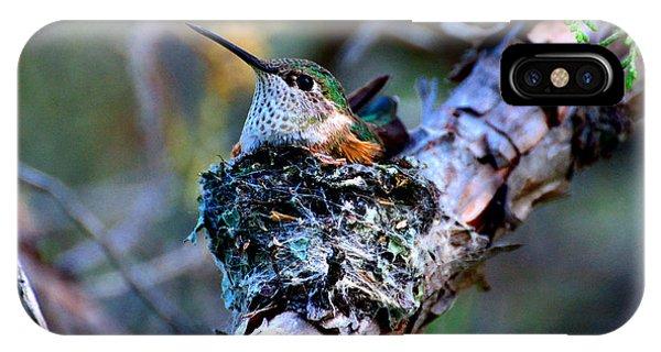 Nesting Hummingbird IPhone Case