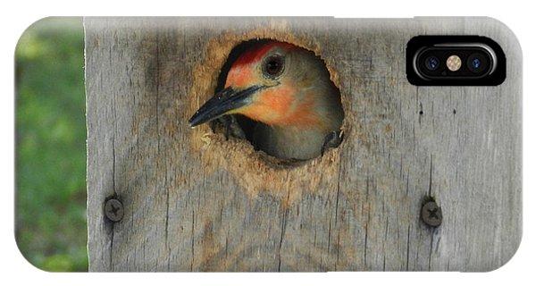 Nesting Woodpecker IPhone Case