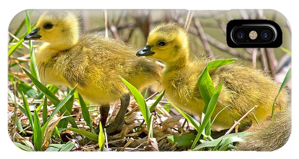 Goslings iPhone Case - New Beginnings by Betsy Knapp