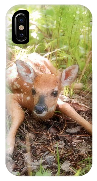 New Fawn In The Forest IPhone Case