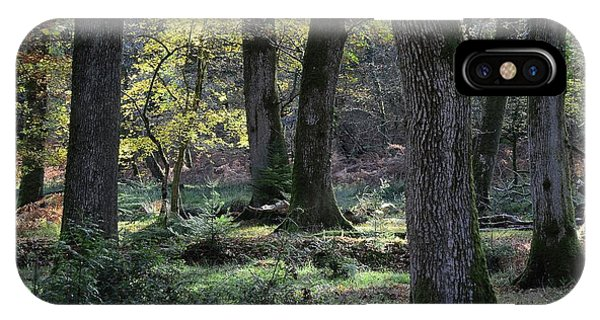 Deciduous iPhone Case - New Forest by Colin Varndell/science Photo Library