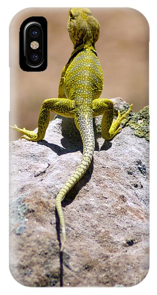New Photographic Art Print For Sale Lizard Back Ghost Ranch New Mexico IPhone Case