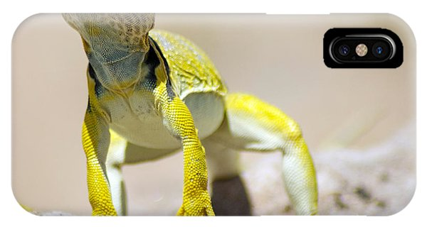 New Photographic Art Print For Sale Yellow Lizard Ghost Ranch New Mexico IPhone Case